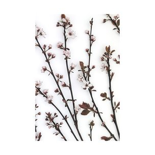 Picture of 101798-L -Budding Blossom (40 x 60)